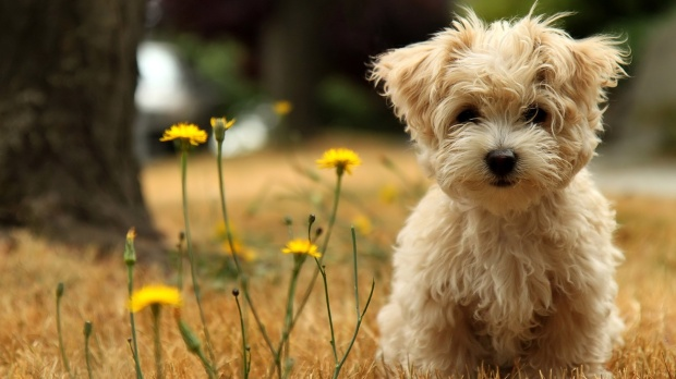cute-dogs-hd-download-4
