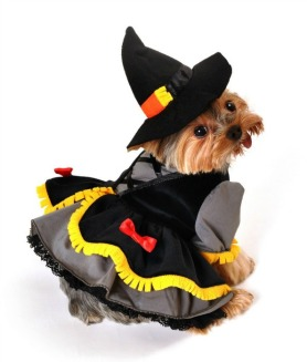 scarecrow-costumes-for-dogs